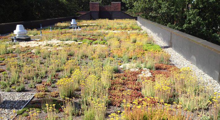 Vegetative Roofs Green Roofs Vegetative Roof System