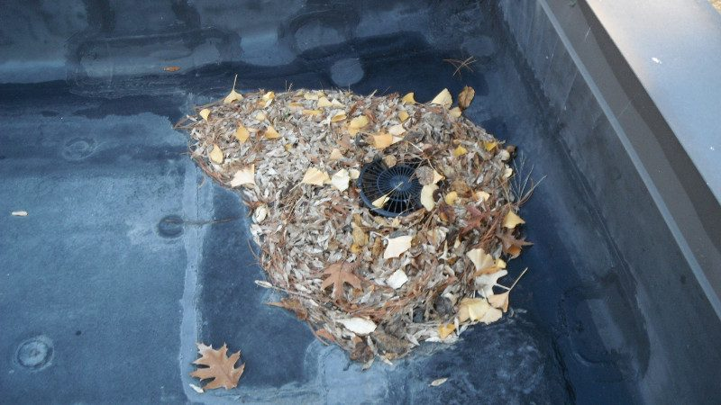 Clogged Roof Drain Gsm Roofing