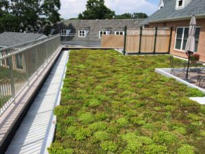 Side View of Vegetative Roof with Greenery